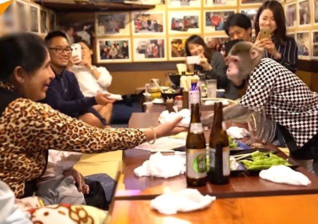 میمون خدمتکار در رستوران های ژاپن + فیلم