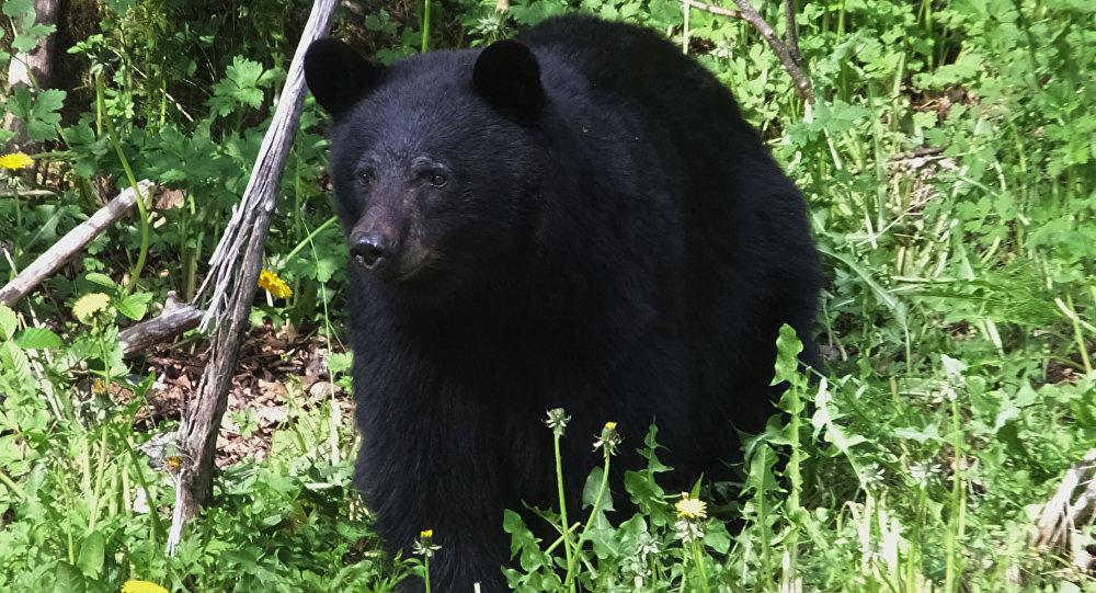 حمله خرس وحشی به دو مرد کوهرنگی + ویدئو