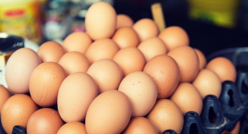 جلوگیری از صادرات تخممرغ به ایران