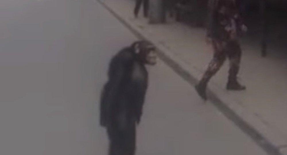 شامپانزه سرگردان + فیلم