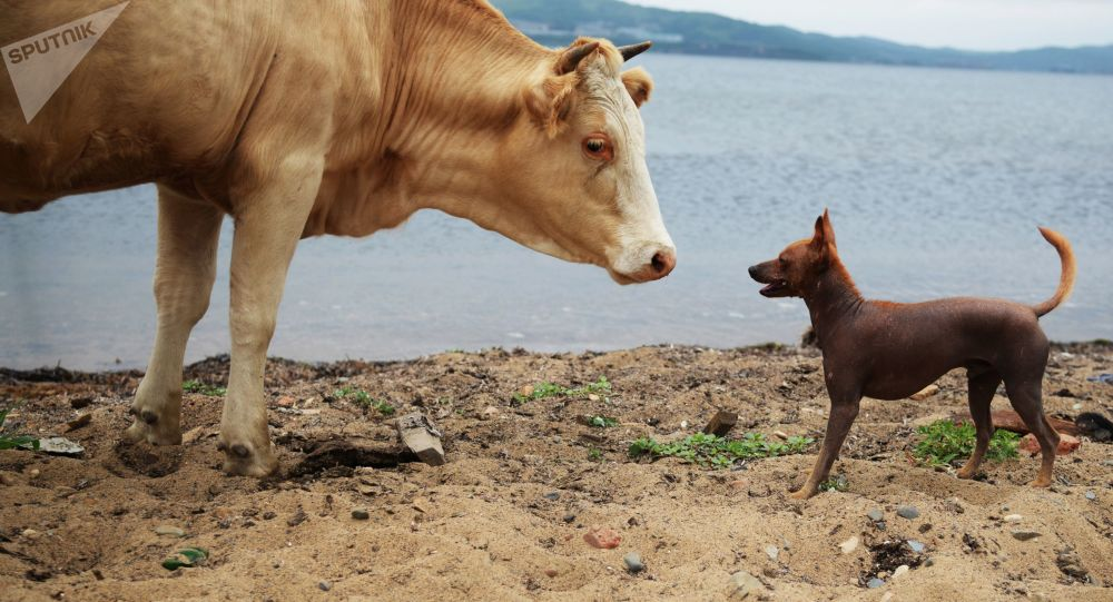 عبارت همچو سگ می ترسد به روایت تصویر +ویدئو