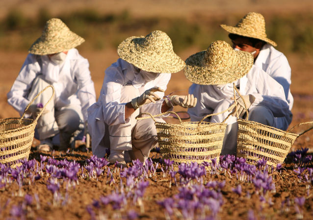 ایران در لیست برتر میراث جهانی کشاورزی