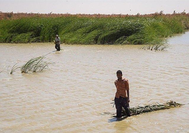 واکنش سازمان محیط زیست ایران به خشک شدن تالاب هورالعظیم
