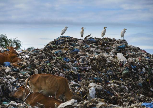 انباشته شدن زبالهها در خیابانهای اهواز +عکس، ویدئو