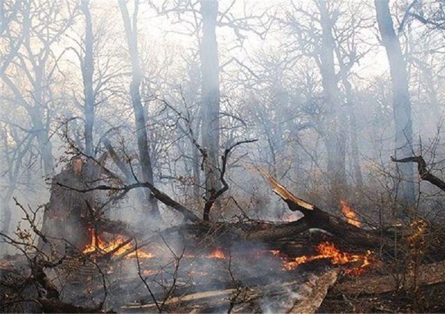 آتش سوزی در جنگل های استان گیلان در ایران