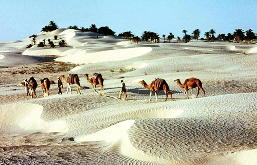 کویر در تونس
