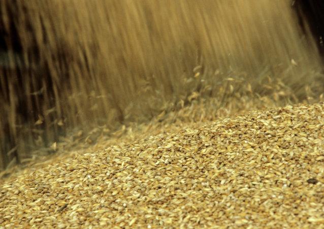 ۷۳۶ هزار تن گندم وارد ایران شد